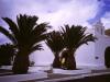 Kirche unter Palmen